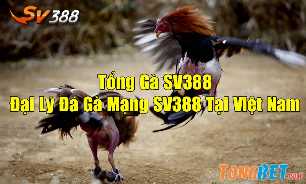 Giới thiệu tổng gà SV388